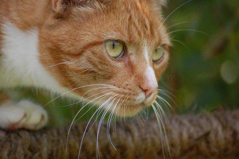 Katze-02