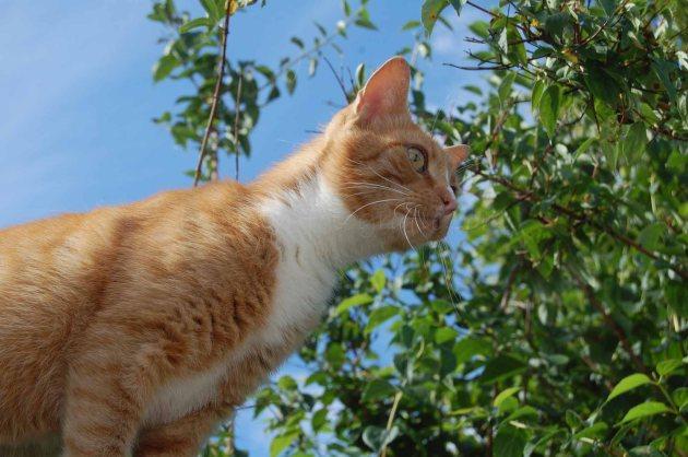 Katze-06